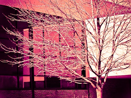 split toning example