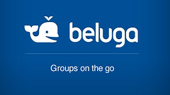 Beluga_splashS