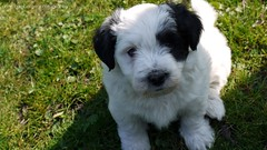 I am a little puppy and I like you! <3 (Rockabella Anne) Tags: park sun nature sunshine puppy essen puppies play natur sonne nordrheinwestfalen spielen sonnenschein welpe werden whelp northrhinewestphalia hundewelpen essenwerden whelps