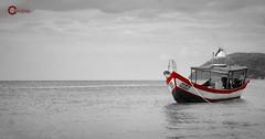 Alone in The Ocean (Tareq Abuhajjaj | Photography & Design) Tags: ocean red sea white fish black speed photography design boat photo high nice nikon flickr alone power top fast gear malaysia arabia riyadh  2010 the tareq    d700 tareqdesigncom tareqmoon tareqdesign  abuhajjaj