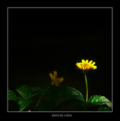 I'm in dark! [explored] (e.nhan) Tags: flowers light black flower art nature yellow closeup landscape colorful colours shadows dof bokeh arts backlighting enhan