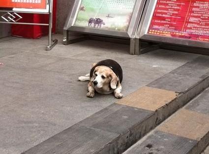 好乖的狗狗