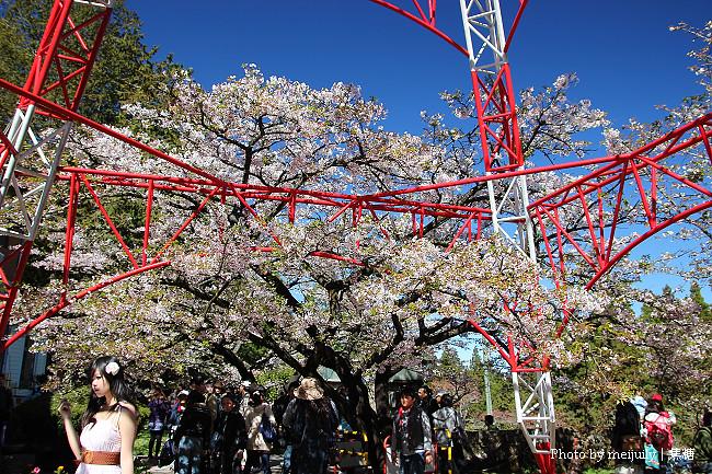 2011阿里山櫻花季晴天版11