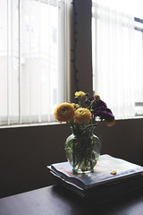 Wilting (Pink Scarf) Tags: flowers windows stilllife table ranunculus canon5d melancholy domesticlife wilting canon35mm2 mydeepcontrastaction