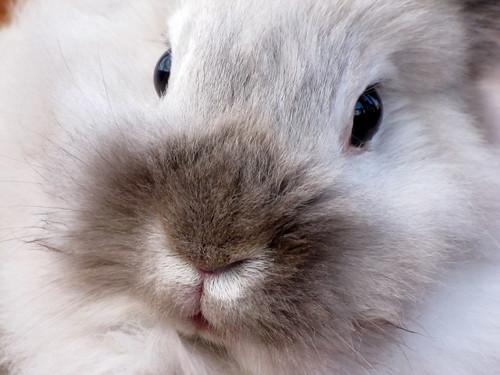 Bunny extreme closeup