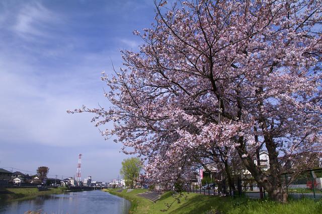 杉戸町から祈っています PRAY FOR JAPAN FROM SUGITO
