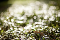 Bokeh Overload (tyler hayward) Tags: green nature beautiful canon leaf spring pretty bokeh 85mm exams l 5d 12 anglefinder somuchbokeh