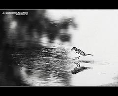 (Abdulrahman AL-Dukhaini || ) Tags: canon lens 7d mm 70200 2010 1432   abdulrahman      aldukhaini