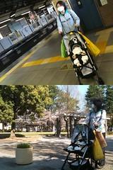埼京線で移動したとらちゃん (4/13)