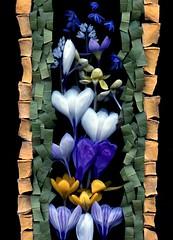 41216 Cucurbita maxima, Leucothoe fontanesiana, Crocus, Scilla siberica, Pushkinia (horticultural art) Tags: flowers design crocus getty horticulture springflowers scillasiberica pushkinia cucurbitamaxima leucothoefontanesiana horticulturalart 143958823