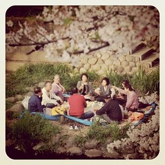 People enjoying the cherry blossoms