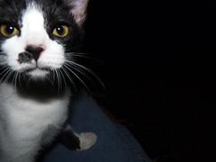 Malhada ( Lorena) Tags: white black branco cat preto gato e preta gata  branca malhada