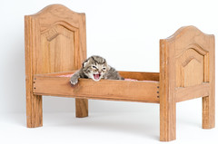 My Bed is too big - kitty (Carl's Photography) Tags: cat nikon kitten kitty iso320 f40 sb800 alienbees 85mmf14d nikkor85mmf14d strobist 1250sec sb900 d7000 43inchshootthroughumbrella 1250secatf40 nikond7000 paraboliclightmodifier gettyartistpicks nikonsg3irirpanel whitediffusioncover ab64inchsilverplm