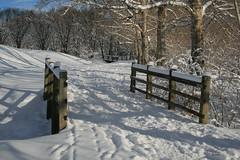 Confederation Park, Calgary - p1583 (photos by Bob V) Tags: winter snow calgary alberta albertacanada confederationpark snowscene calgaryalberta canadianwinter
