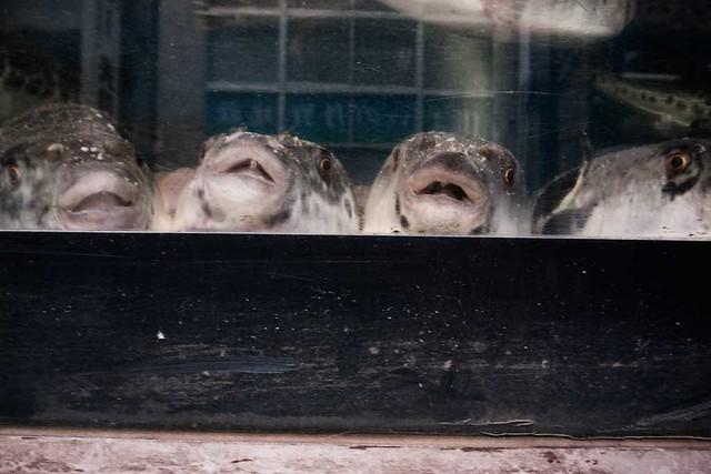 Globefish