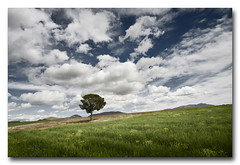Aire puro... (jose.singla) Tags: sky espaa color tree canon landscape spain sigma paisaje minimal murcia cielo nubes rbol campo 1020 lorca 50d lapaca zarcilladeramos josesingla