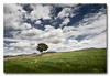 Aire puro... (jose.singla) Tags: sky españa color tree canon landscape spain sigma paisaje minimal murcia cielo nubes árbol campo 1020 lorca 50d lapaca zarcilladeramos josesingla