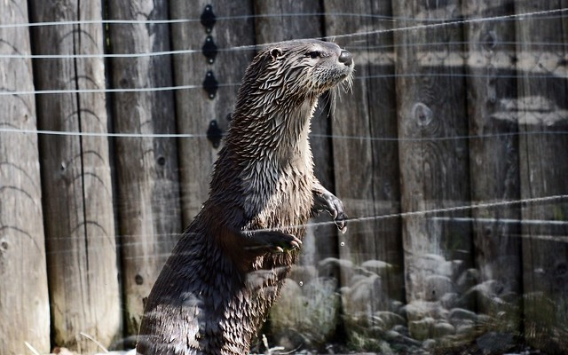 The Otter is Watching