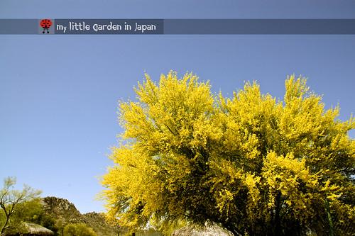 Spring-in-Sonora-desert-2