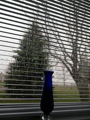 storm before (2) (Ange 29) Tags: blue trees windows canada glass king olympus rainstorm vase blinds venetian shrubs township e30 zd 1435mm