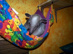 Cinco in the baby hammock