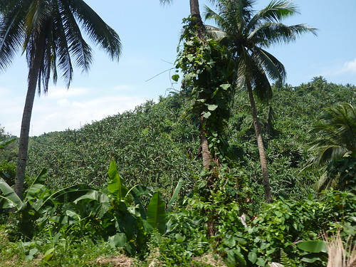 Mindoro-Sabang-Calapan (15)