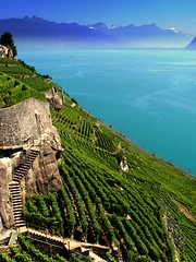steeply vineyards - ( explored ) (mujepa) Tags: blue lake alps water stairs alpes landscape switzerland vineyard eau suisse geneva wine terraces lac lausanne stocks bleu corniche vin paysage vignoble ceps vevey lakegeneva escaliers vaud lavaux laclman terrasses dezaley mygearandme
