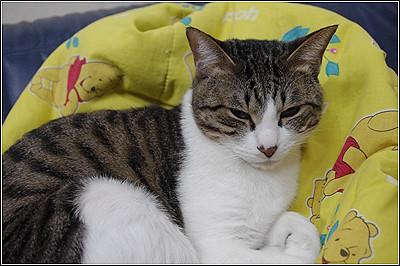 今日の猫(2011-05-01)