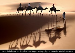 Morocco - Merzouga Sand - Erg Chebbi Dunes - Shadows of the Caravan ( Lucie Debelkova / www.luciedebelkova.com) Tags: trip travel light sunset shadow vacation panorama sunlight color colour tourism nature colors beautiful sunrise wonderful landscape outdoors gold dawn golden licht fantastic sand scenery mood colours view desert dusk lumire couleurs dunes awesome natureza dune scenic sable natuur atmosphere paisaje paisagem colores morocco beaut stunning vista outlook duna overlook paysage exploration incredible landschaft camels farbe couleur breathtaking paesaggio dne farben beautifulscenery merzouga edgeoftheworld wildnerness magiclight dramaticlight errachidia luciedebelkova wwwluciedebelkovacom