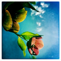 (angelmontana) Tags: beauty clouds leaf phone air vain platinumphoto hpstm oneofakindimages iphoneappshpstmsquare