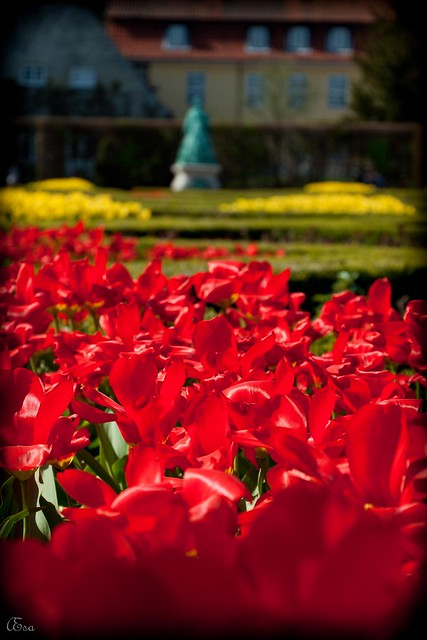 Red flowers, yellow flowers and a statue