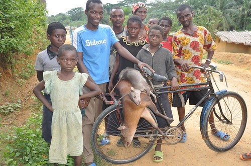 Bush meat on a bicycle