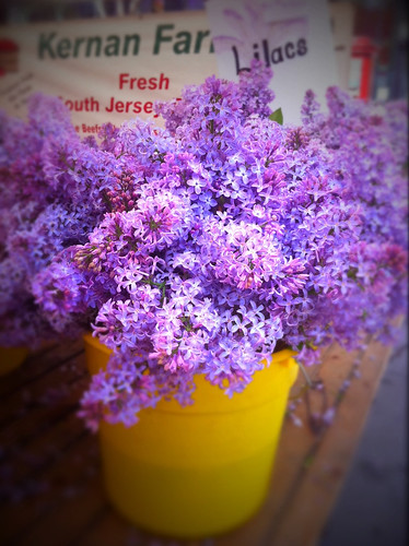 Lilacs by the bucket