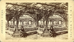 Interior Rustic Shelter, Central Park, New York  =view (depthandtime) Tags: park old newyorkcity original woman newyork vintage bench found stereoscopic 3d women view antique centralpark rustic 19thcentury victorian stereo arbor card stereoview shelter stereograph foundphoto nineteenthcentury moulton 1870s stereographic stereocard parallelview stereoscopeview jwjsmoulton