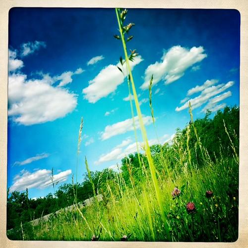 5-16 prairie
