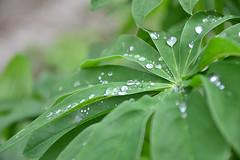 rain3-sooc