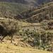 Gondar to Debark Ethiopia