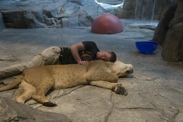 D4 MGM lions 1