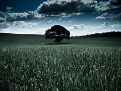 [Free Image] Nature / Landscape, Fields / Farm, Trees, Wheat, Green, United Kingdom, 201106041900