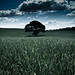 Cardiff - Wheat Fields
