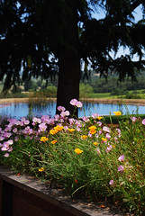 On the Grounds of Armida Winery (Little Italy Photography) Tags: california flowers tree pond wine vineyards grapes winecountry vino healdsburg