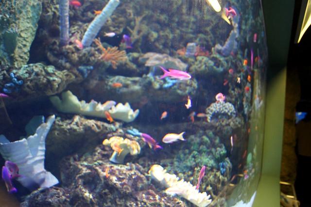 LB aquarium