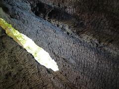 Window (Jed Sullivan) Tags: california santacruz southbay redwoodforest
