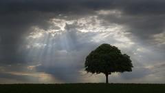 Le Seigneur des plaines (photosenvrac) Tags: photography photo spirit lumière ciel arbre marronier plaine