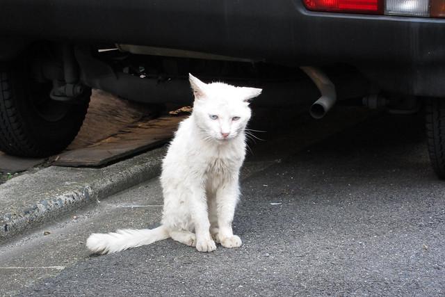Today's Cat@2011-06-29
