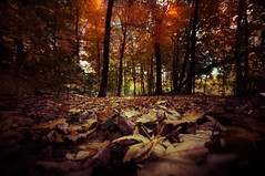 September 23, 2016 at 07:21PM (Jeff E. Smith) Tags: photography photographers twitter fall leaves colors stephen king landscapes woods wiccan witchcraft