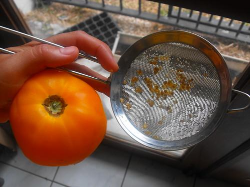 Recolección de semillas