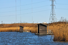 Urban Wetland - NJ Meadowlands