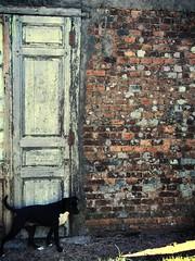 The dog in the door (jiss1991) Tags: door dog sun film wall sunrise pared puerta gimp perro edit