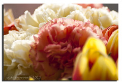 PEACHES AND CREAM (vicki127.) Tags: flowers red macro yellow canon300d cream peach tulip carnation sigma70300 digitalcameraclub beautifulphoto youmademyday thisphotorocks ilovemypics wonderfulworldofflowers artofimages absolutelyperrrfect adobephotoshopcs5 ringofexcellence vickiburrows vicki127